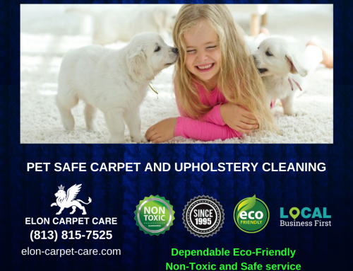 Non-toxic and Safe cleaning carpets for pets